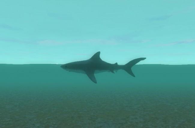 水面を泳ぐサメ