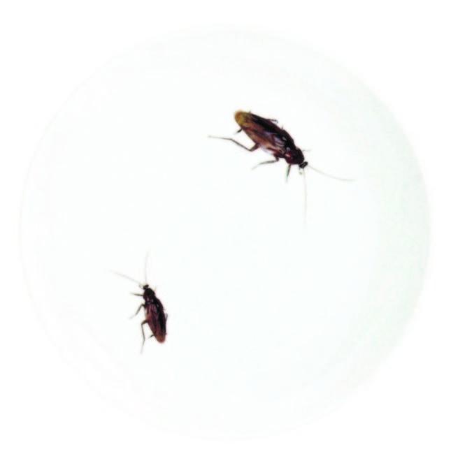 キモい展ゴキブリお皿